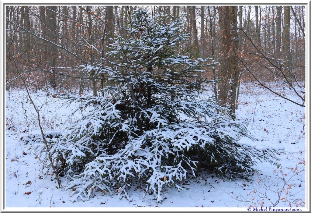 [fil ouvert] la forêt dans tous ses états - Page 29 Dsc10058