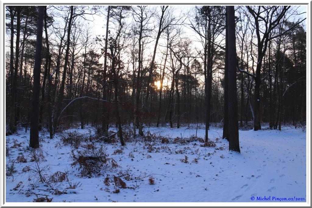 [fil ouvert] la forêt dans tous ses états - Page 29 Dsc10059