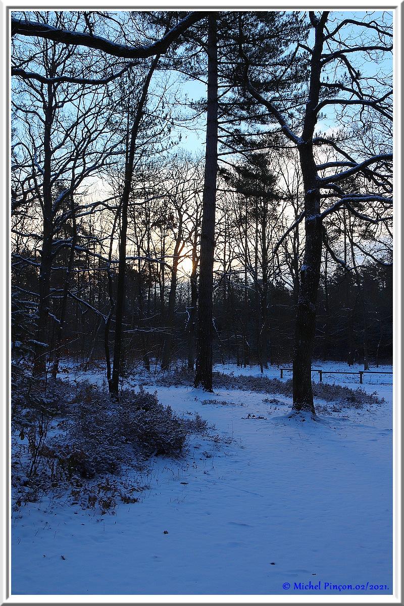 [fil ouvert] la forêt dans tous ses états - Page 29 Dsc10060
