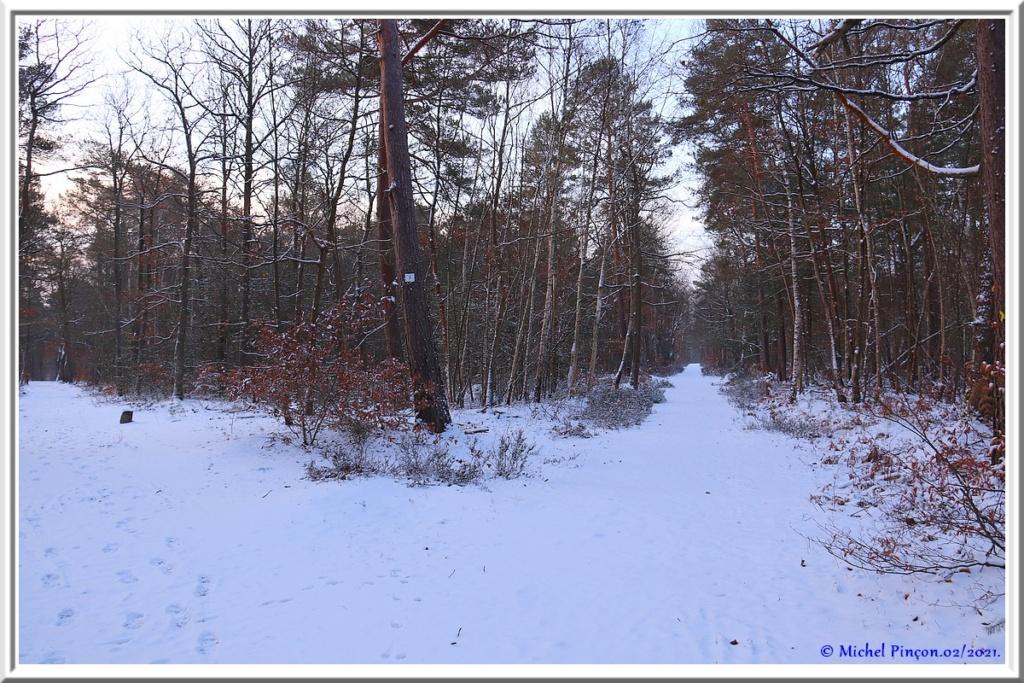 [fil ouvert] la forêt dans tous ses états - Page 29 Dsc10062