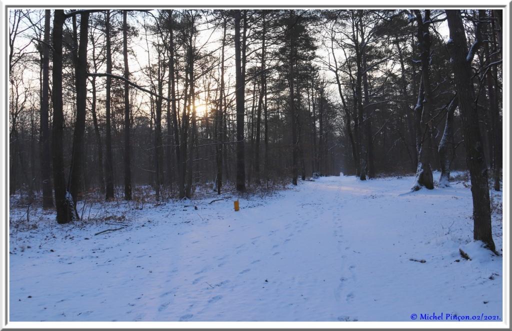 [fil ouvert] la forêt dans tous ses états - Page 29 Dsc10063