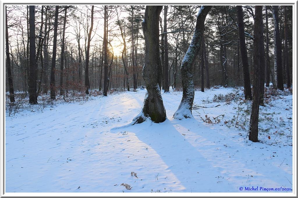 [fil ouvert] la forêt dans tous ses états - Page 29 Dsc10064
