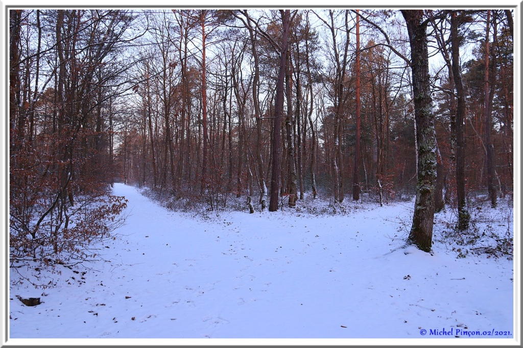 [fil ouvert] la forêt dans tous ses états - Page 29 Dsc10065