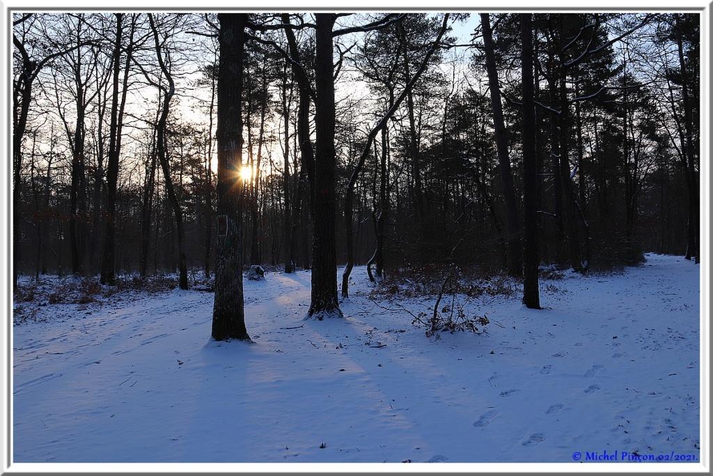 [fil ouvert] la forêt dans tous ses états - Page 29 Dsc10066