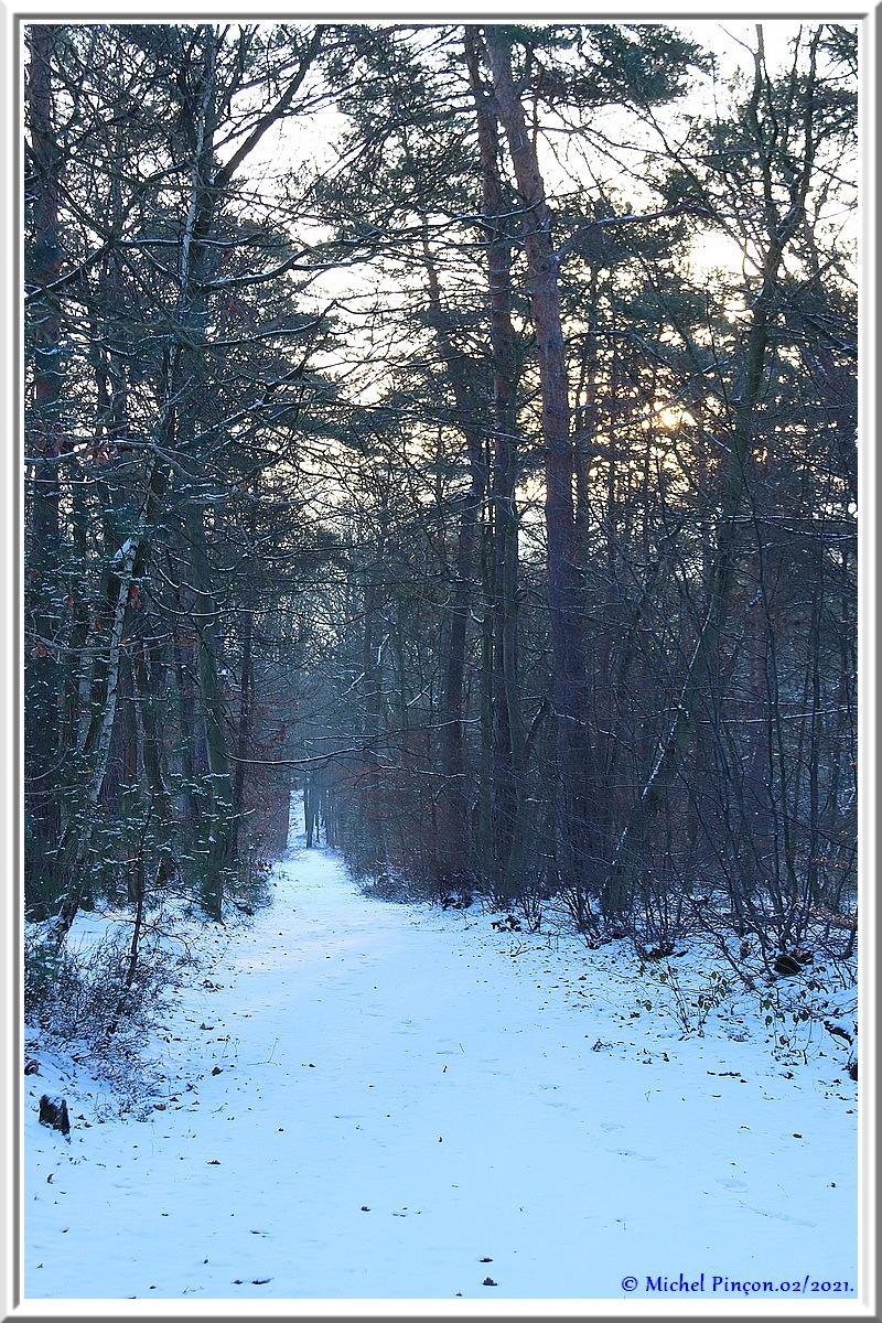 [fil ouvert] la forêt dans tous ses états - Page 29 Dsc10067