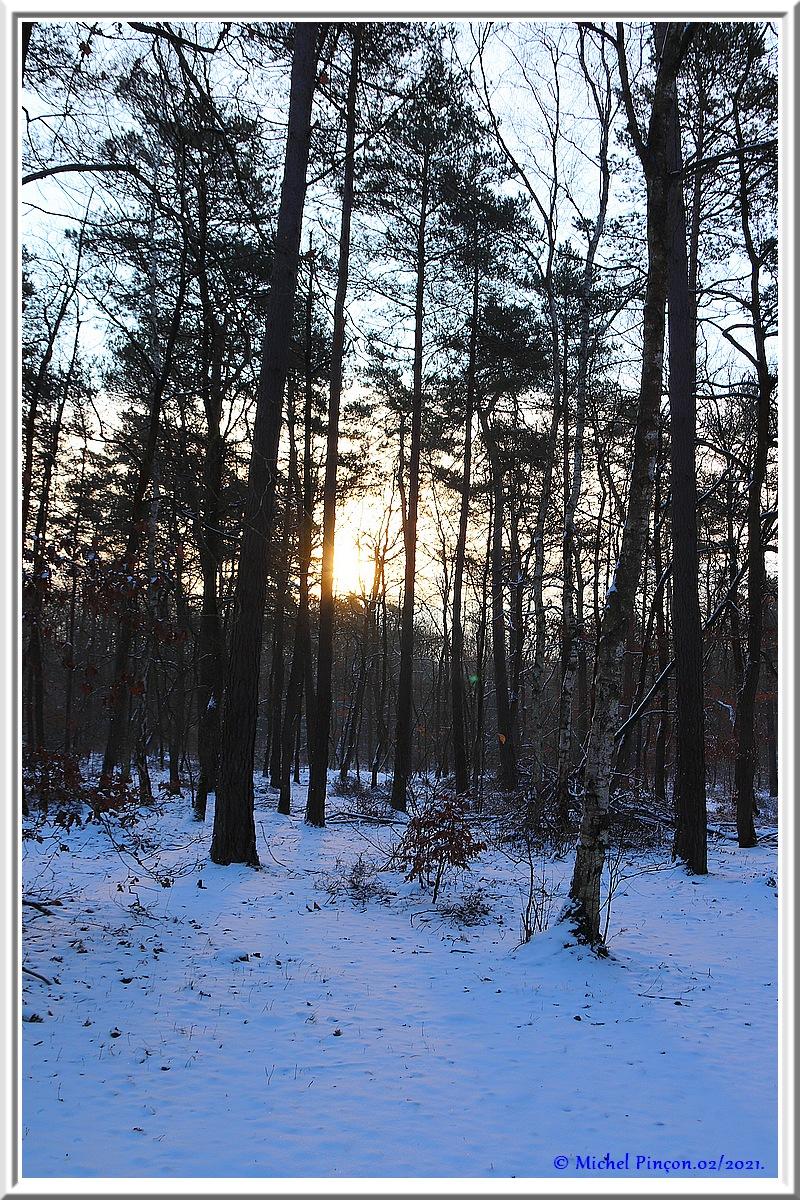 [fil ouvert] la forêt dans tous ses états - Page 29 Dsc10068