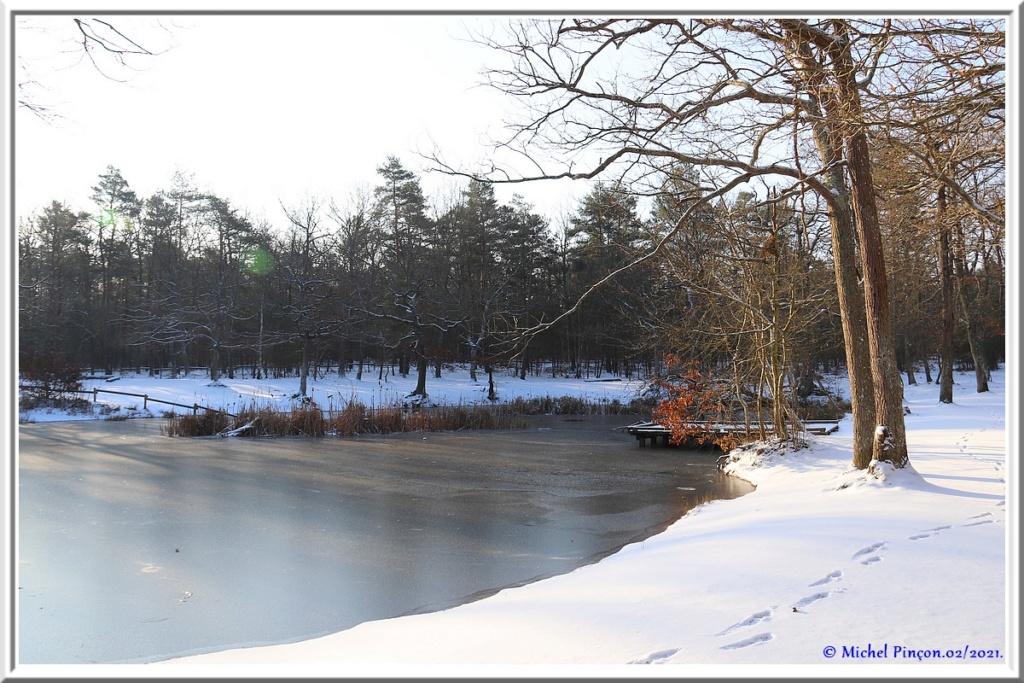[fil ouvert] la forêt dans tous ses états - Page 29 Dsc10117