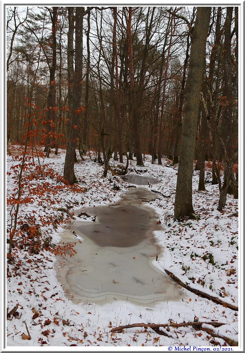 [fil ouvert] la forêt dans tous ses états - Page 29 Dsc10118