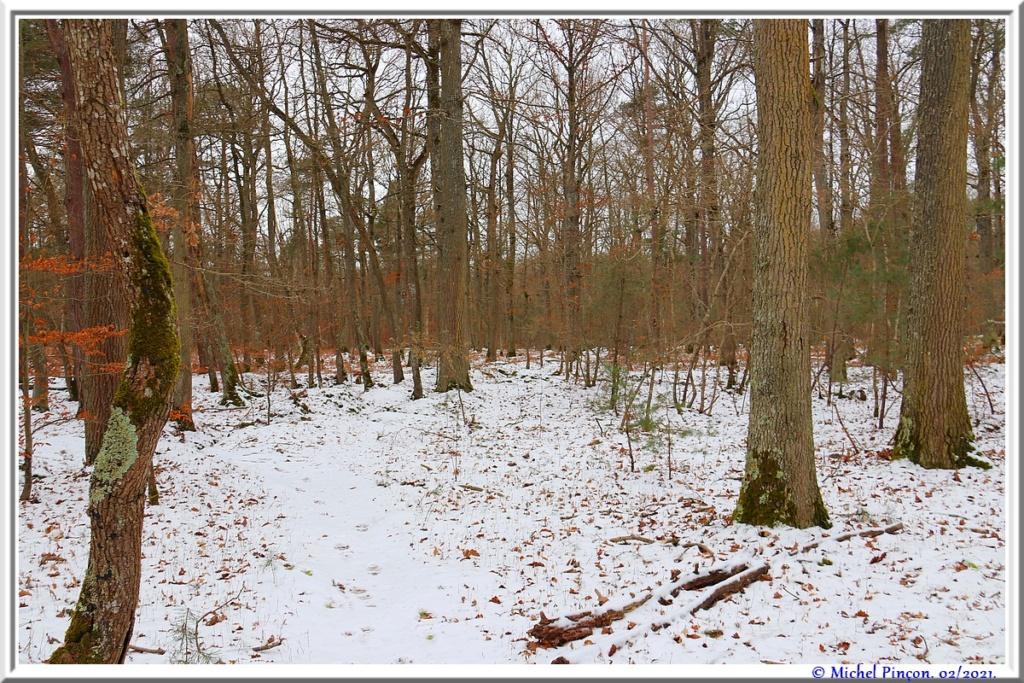 [fil ouvert] la forêt dans tous ses états - Page 29 Dsc10120