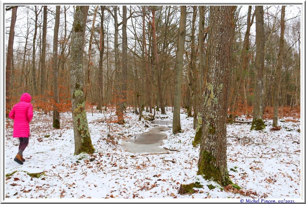 [fil ouvert] la forêt dans tous ses états - Page 29 Dsc10121