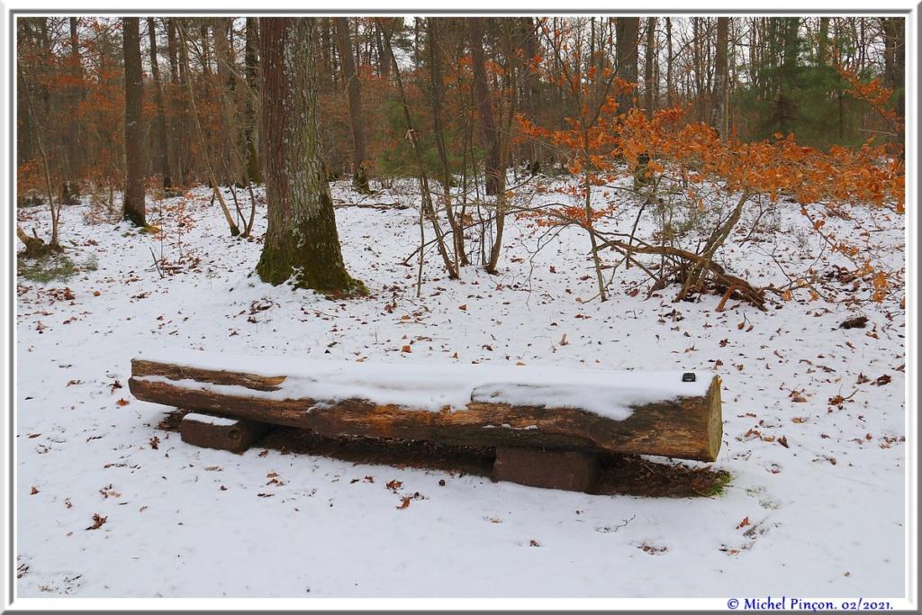 [fil ouvert] la forêt dans tous ses états - Page 29 Dsc10122