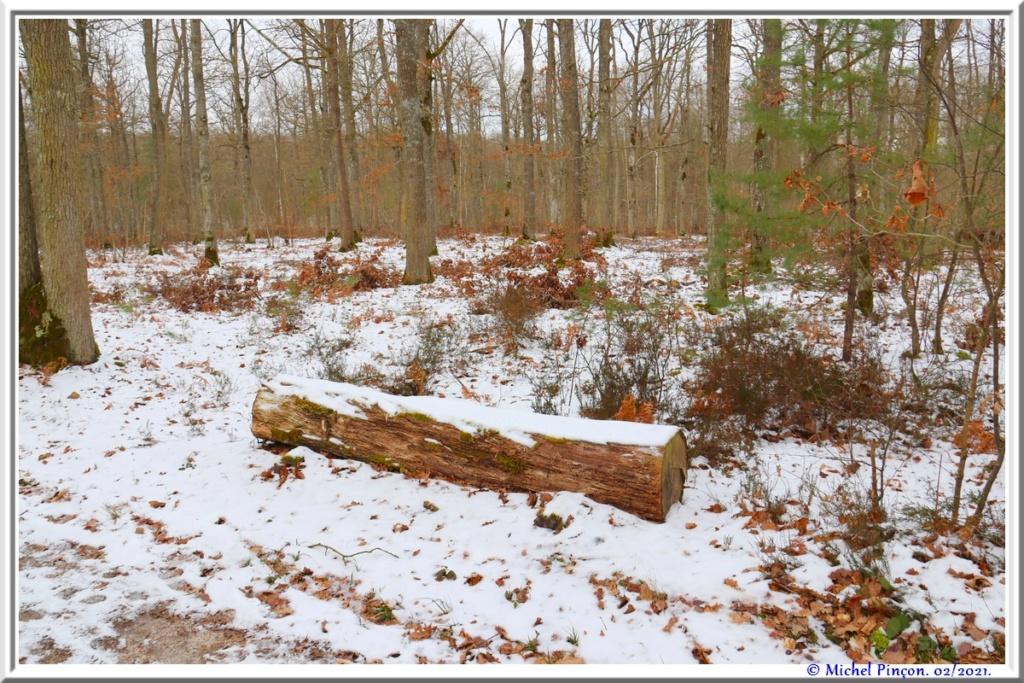 [fil ouvert] la forêt dans tous ses états - Page 29 Dsc10123