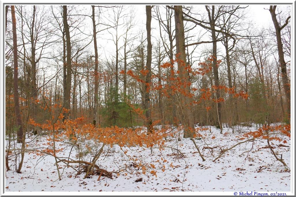 [fil ouvert] la forêt dans tous ses états - Page 29 Dsc10124