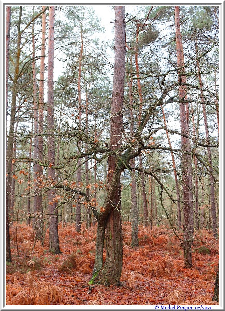 [fil ouvert] la forêt dans tous ses états - Page 29 Dsc10132