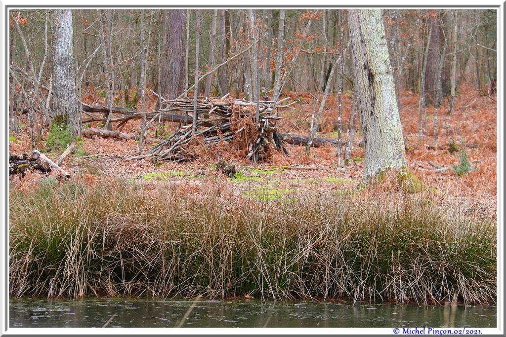 [fil ouvert] la forêt dans tous ses états - Page 29 Dsc10165