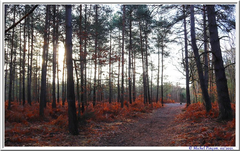 [fil ouvert] la forêt dans tous ses états - Page 29 Dsc10166