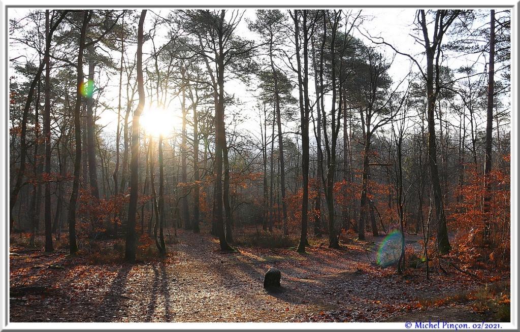 [fil ouvert] la forêt dans tous ses états - Page 29 Dsc10169