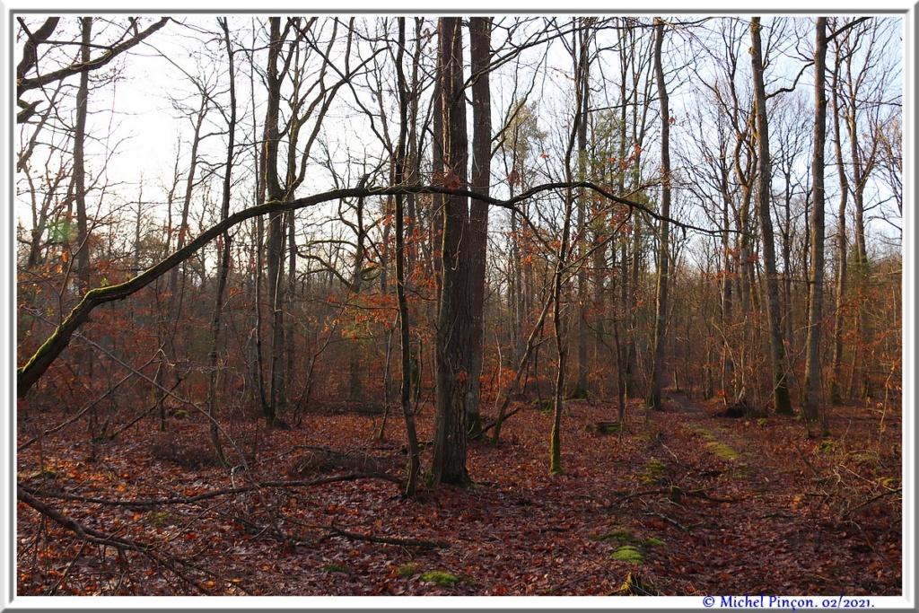 [fil ouvert] la forêt dans tous ses états - Page 29 Dsc10171