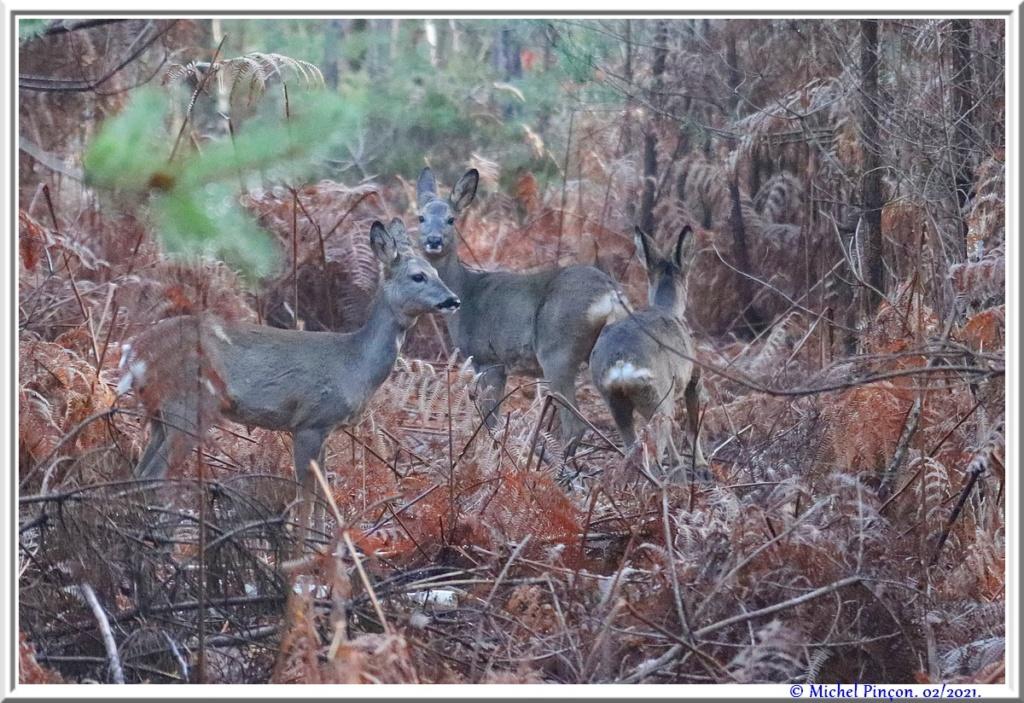 [fil ouvert] la forêt dans tous ses états - Page 29 Dsc10172