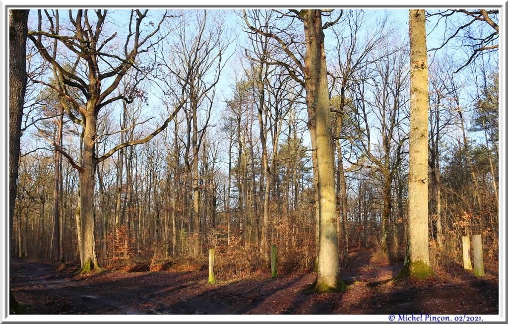[fil ouvert] la forêt dans tous ses états - Page 29 Dsc10173