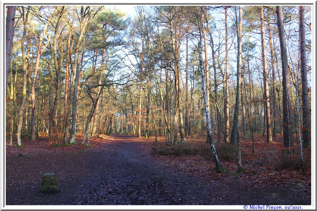 [fil ouvert] la forêt dans tous ses états - Page 29 Dsc10175