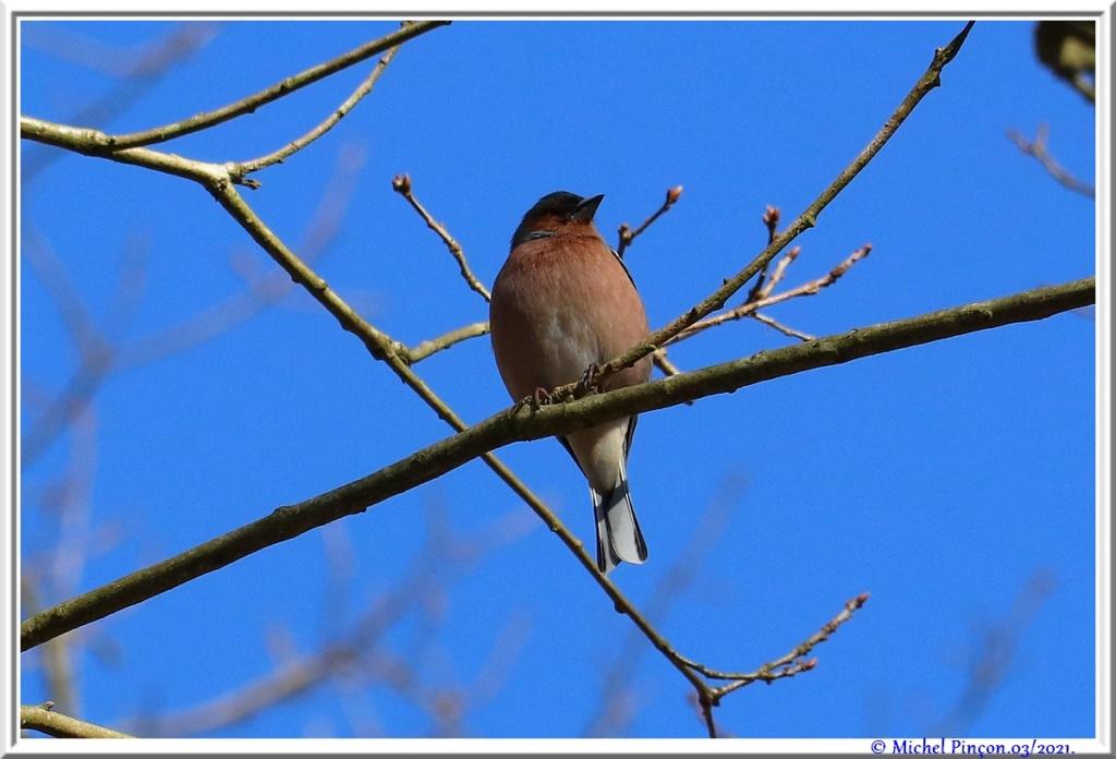 [Ouvert] FIL - Oiseaux. - Page 8 Dsc10462