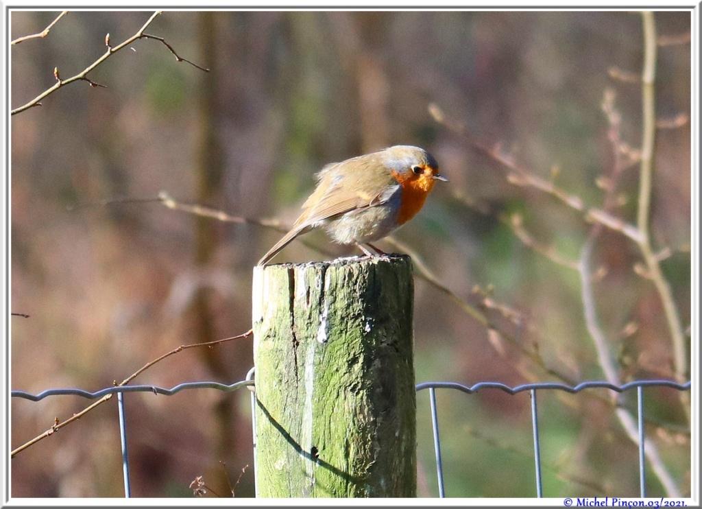 [Ouvert] FIL - Oiseaux. - Page 8 Dsc10463