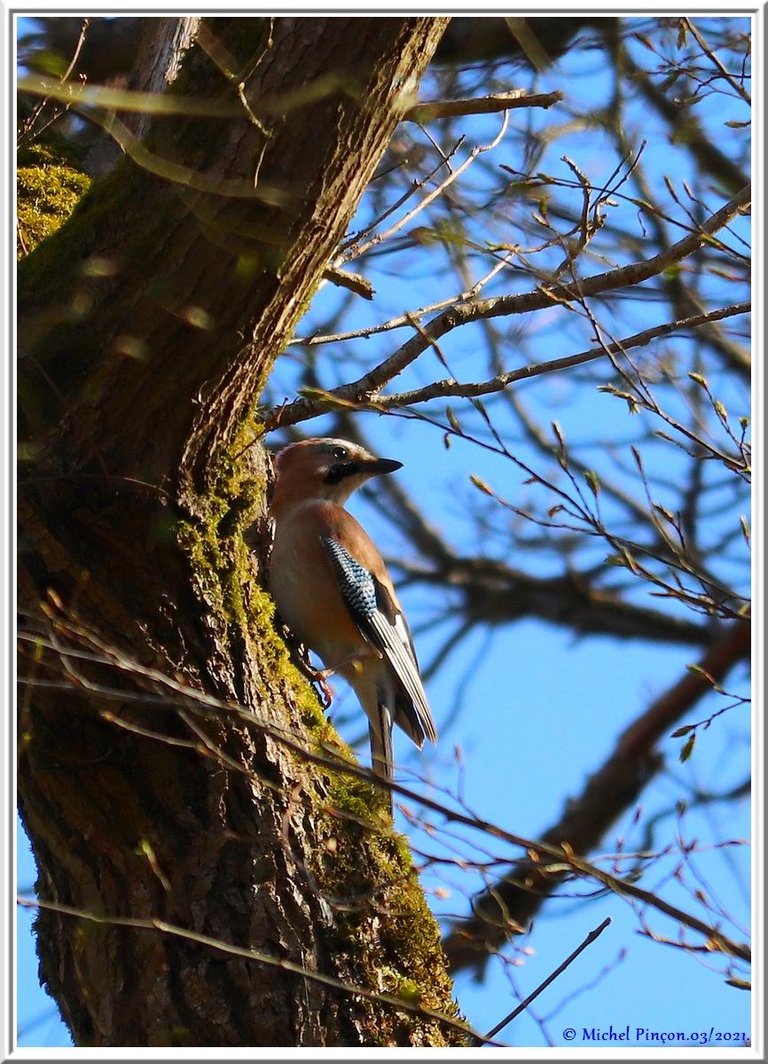 [Ouvert] FIL - Oiseaux. - Page 8 Dsc10465