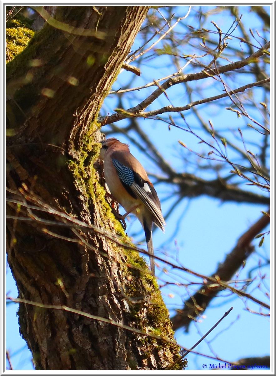 [Ouvert] FIL - Oiseaux. - Page 8 Dsc10466