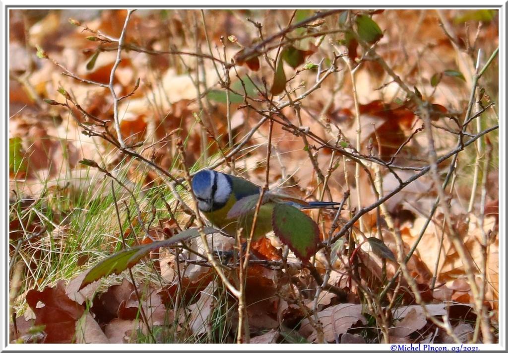 [Ouvert] FIL - Oiseaux. - Page 8 Dsc10468