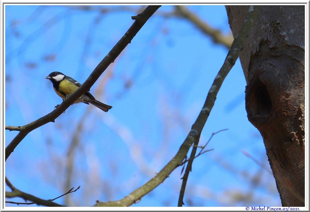 [Ouvert] FIL - Oiseaux. - Page 8 Dsc10481