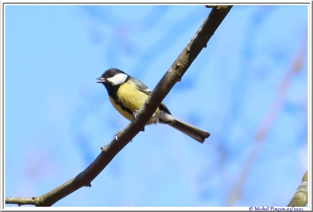 [Ouvert] FIL - Oiseaux. - Page 8 Dsc10482