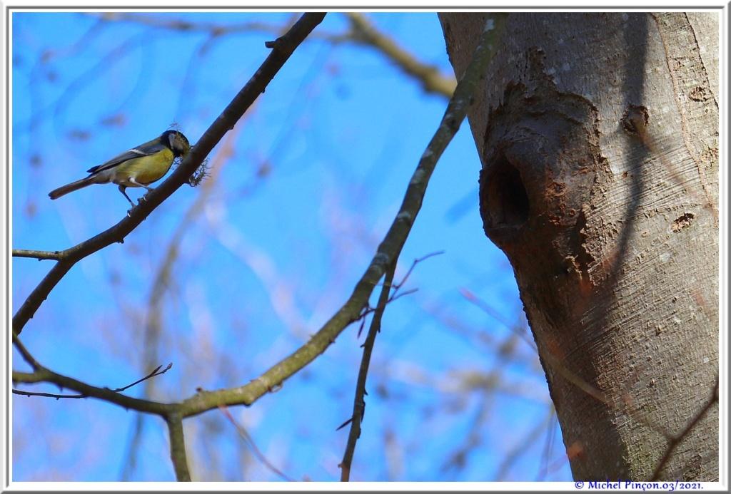 [Ouvert] FIL - Oiseaux. - Page 8 Dsc10483