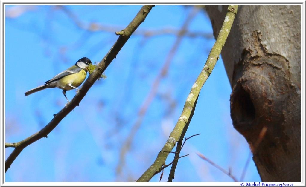 [Ouvert] FIL - Oiseaux. - Page 8 Dsc10484