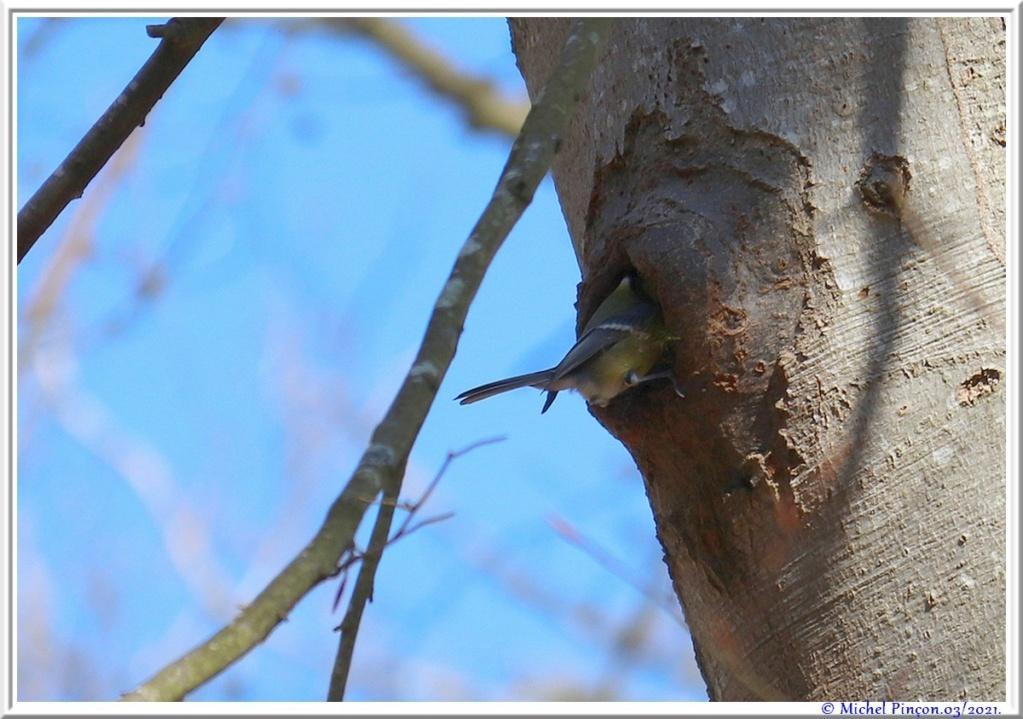 [Ouvert] FIL - Oiseaux. - Page 8 Dsc10486