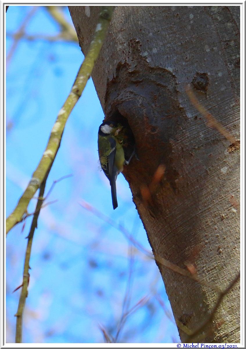 [Ouvert] FIL - Oiseaux. - Page 8 Dsc10487