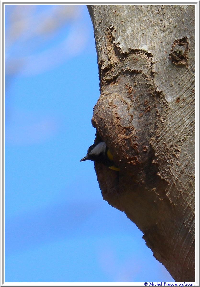 [Ouvert] FIL - Oiseaux. - Page 8 Dsc10488