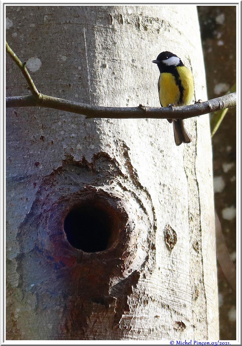 [Ouvert] FIL - Oiseaux. - Page 8 Dsc10490