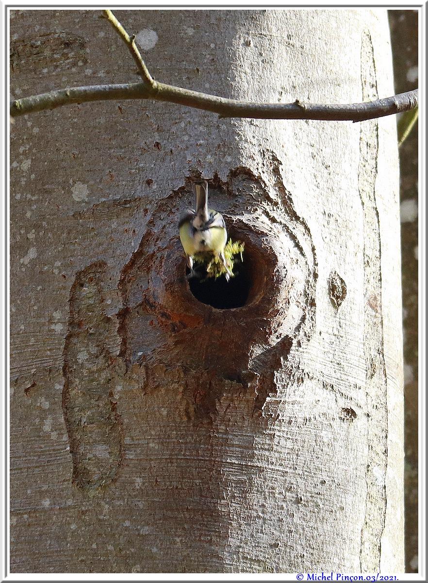 [Ouvert] FIL - Oiseaux. - Page 8 Dsc10492