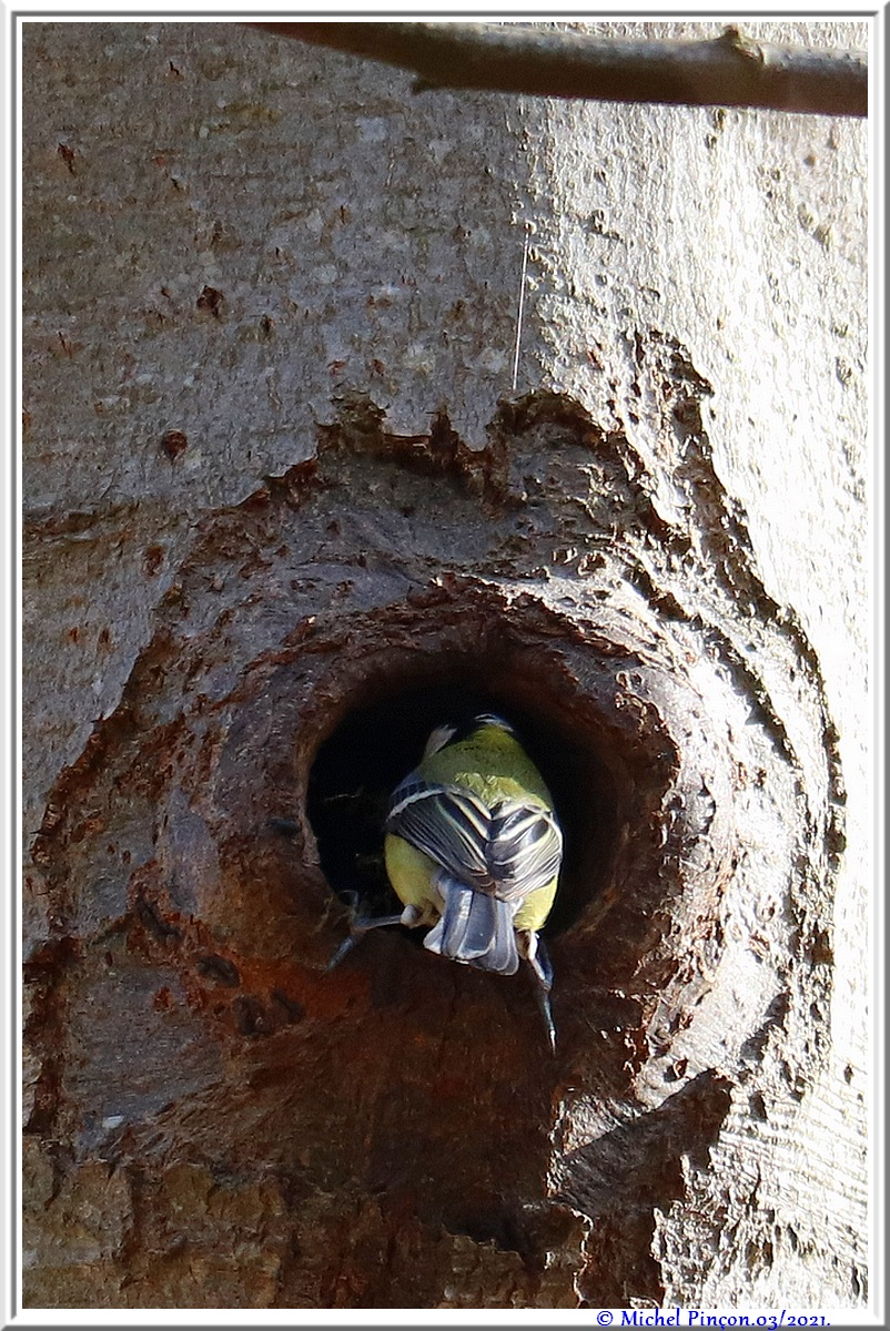 [Ouvert] FIL - Oiseaux. - Page 8 Dsc10494