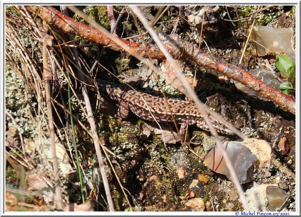 [Fil ouvert à tous] Reptiles, serpents, tortues, amphibiens, ... - Page 12 Dsc10500