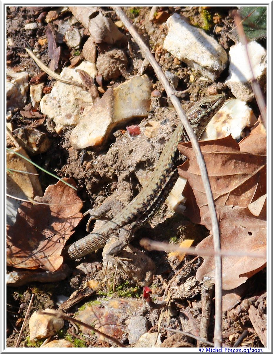 [Fil ouvert à tous] Reptiles, serpents, tortues, amphibiens, ... - Page 12 Dsc10502