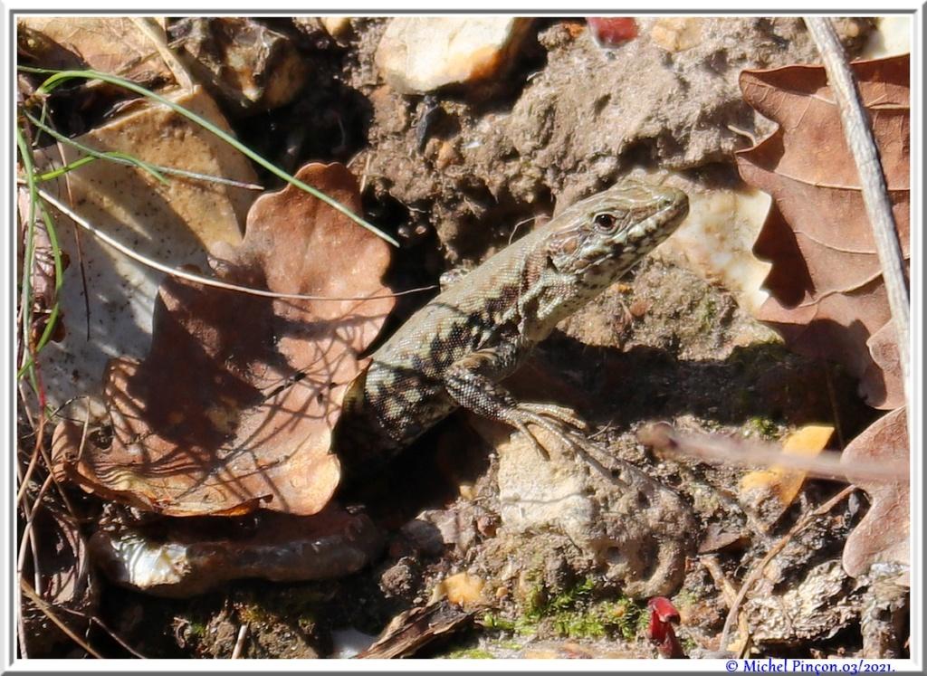 [Fil ouvert à tous] Reptiles, serpents, tortues, amphibiens, ... - Page 12 Dsc10503