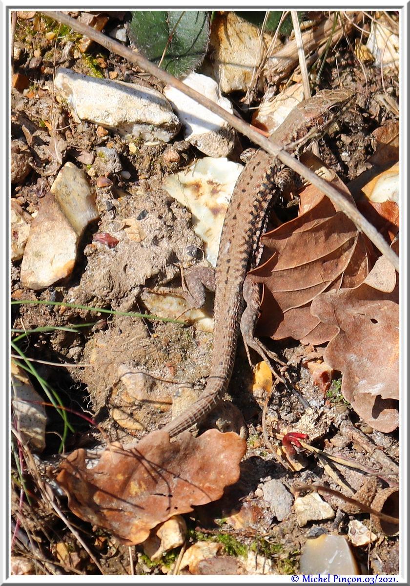 [Fil ouvert à tous] Reptiles, serpents, tortues, amphibiens, ... - Page 12 Dsc10504