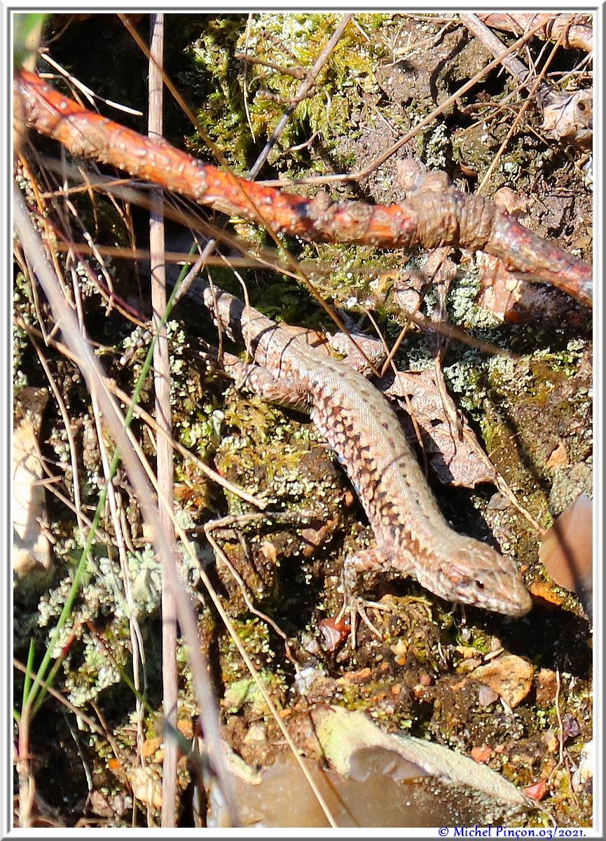 [Fil ouvert à tous] Reptiles, serpents, tortues, amphibiens, ... - Page 12 Dsc10505