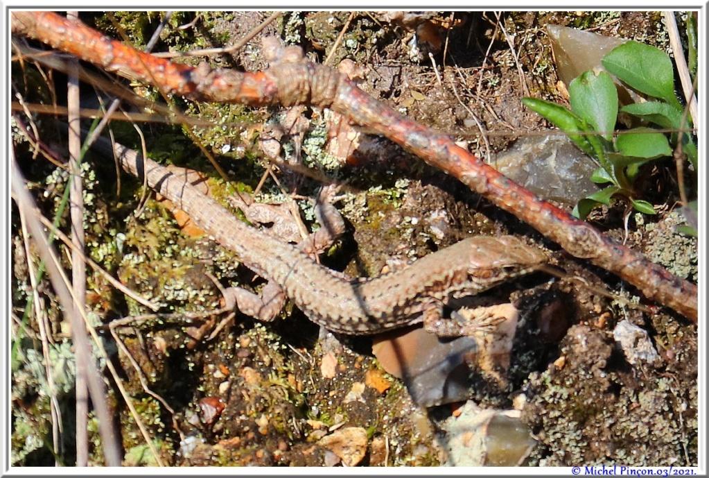 [Fil ouvert à tous] Reptiles, serpents, tortues, amphibiens, ... - Page 12 Dsc10506