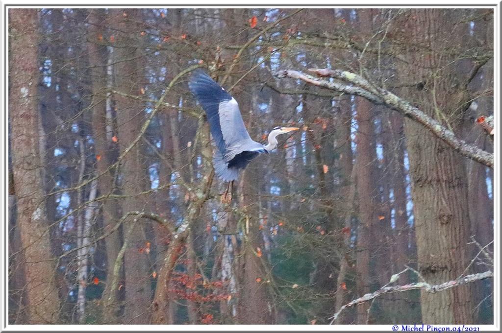 [Ouvert] FIL - Oiseaux. - Page 8 Dsc10541