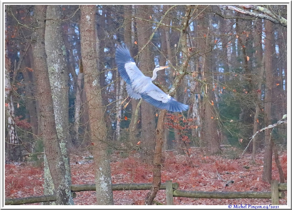 [Ouvert] FIL - Oiseaux. - Page 8 Dsc10542