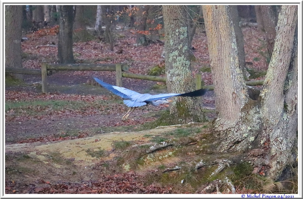 [Ouvert] FIL - Oiseaux. - Page 8 Dsc10543