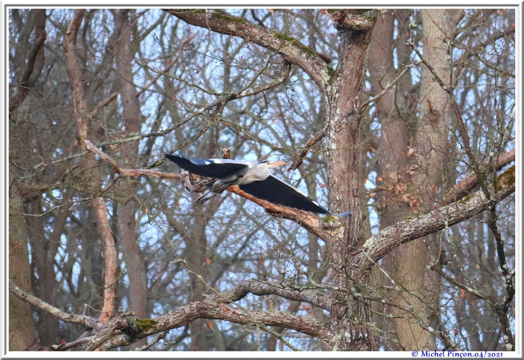 [Ouvert] FIL - Oiseaux. - Page 8 Dsc10544